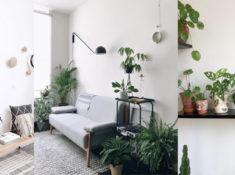 inspiration plantes