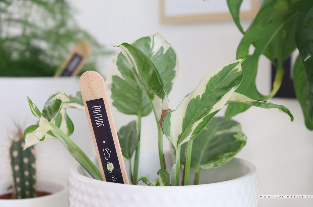 plant namer