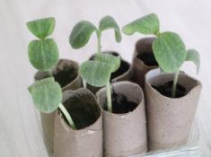 récupération semis