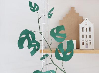 plante papier